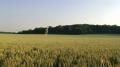 se cacher dans le blé - Videoperformance 2013